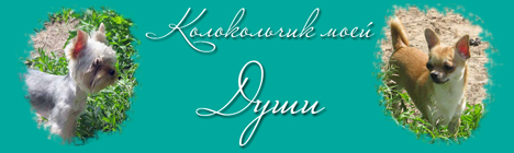 чихуахуа Колокольчик моей Души